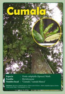 Ficha Cumala, una de las especies vendidas por La Oroza.