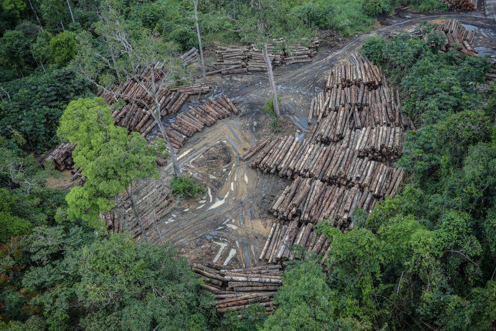 Deforestacio?n Amazoni?a Brasilen?a (3)